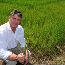Hebdo semaine 6: Les riziculteurs toujours en alerte. Bertrand...